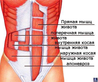 Тодикамп и похудение