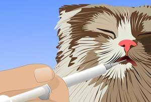 Дозировки аскорбиновой кислоты для кошек